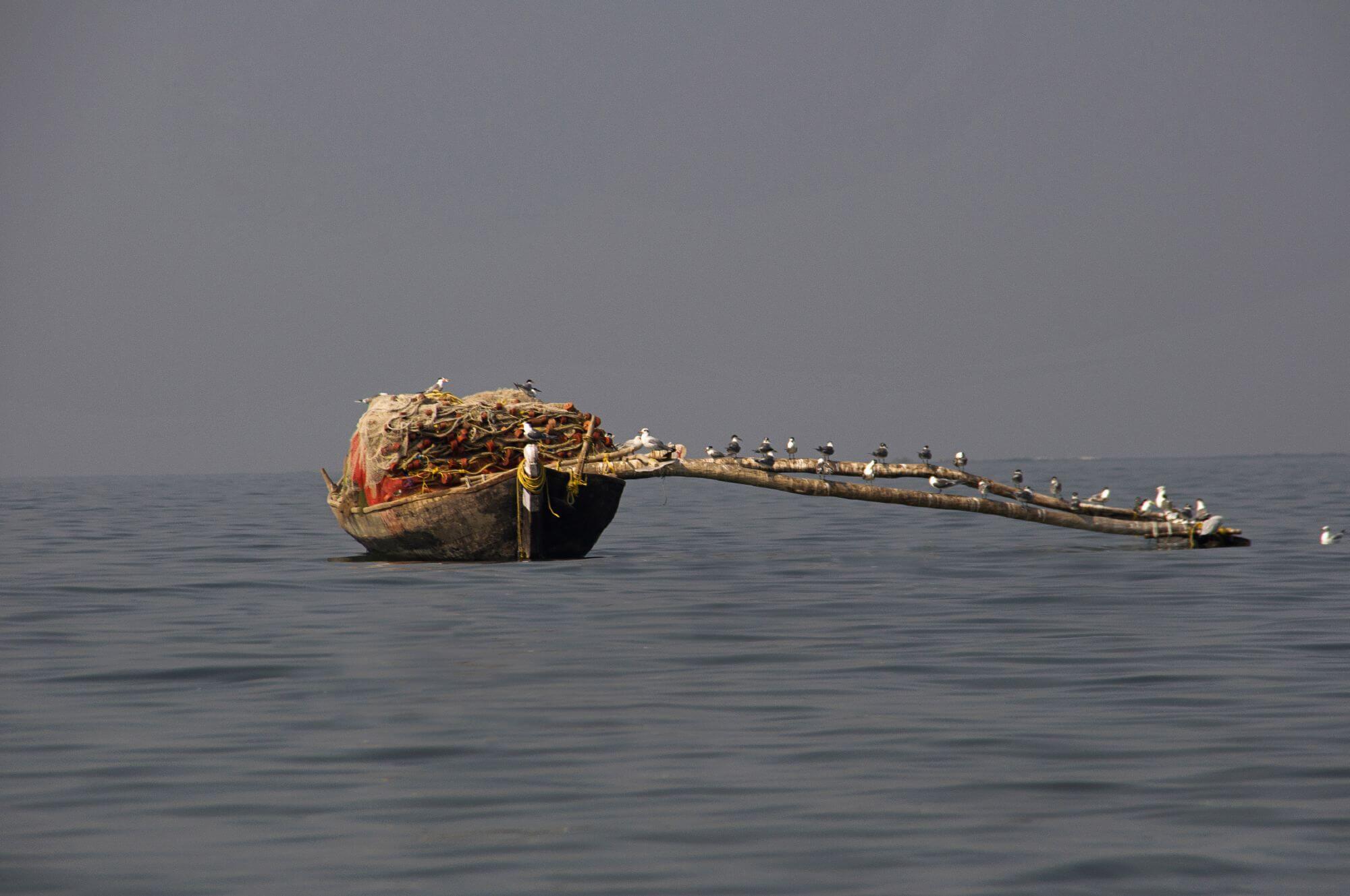 ציפורים נודדות על רשת דייגים - אלגוריה לנפילה ברשת החברתית