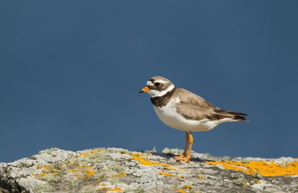 ציפור שיר - פתאום קם אדם בבוקר ומתחיל לצייץ בטוויטר