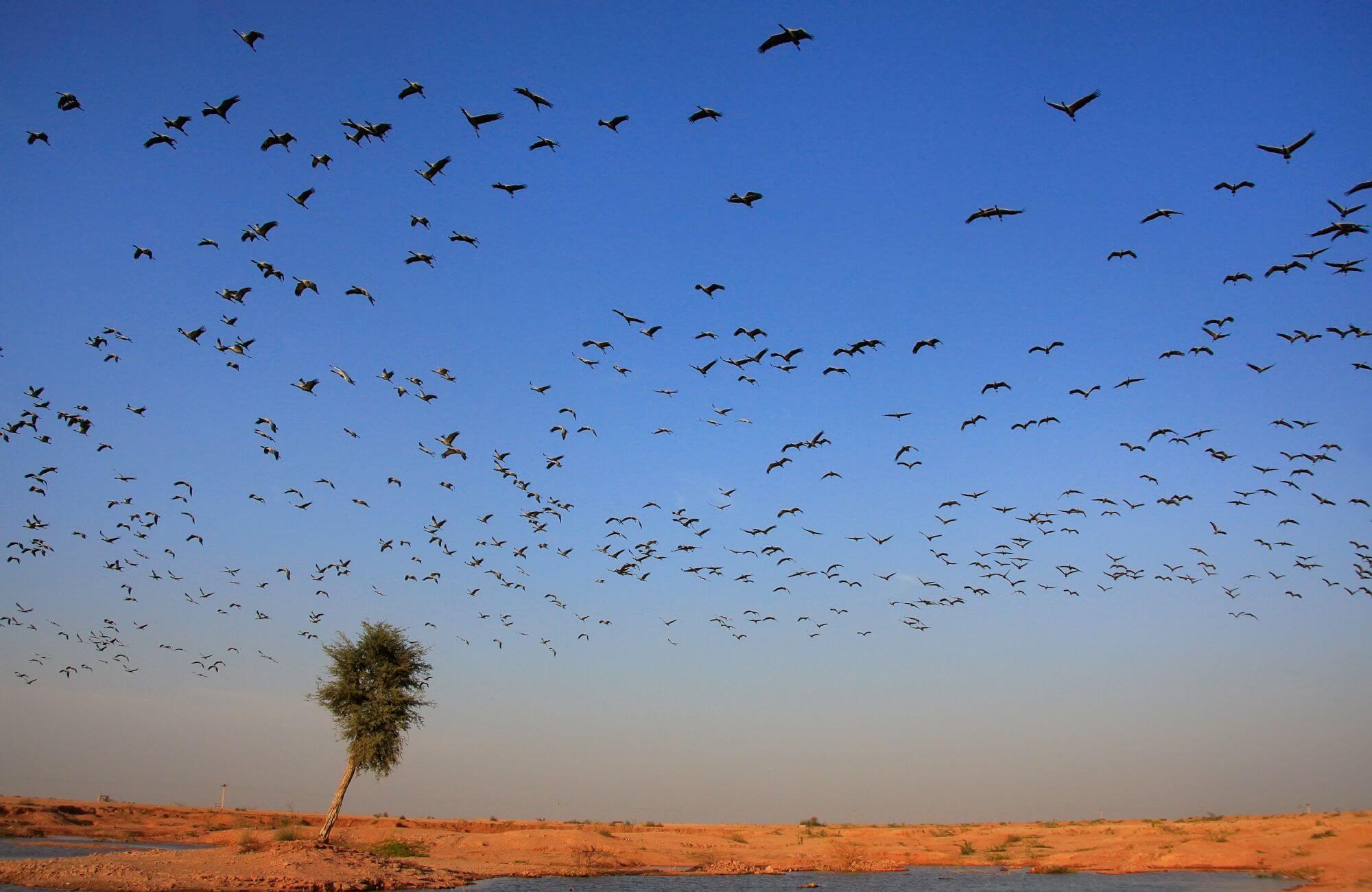 ציפורים נודדות מעל עץ סחוף רוח - כהמחשה למגמות חדשות בשיווק דיגיטלי