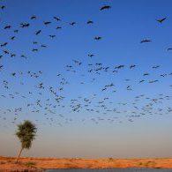 ציפורים נודדות - מגמות שיווק דיגיטלי